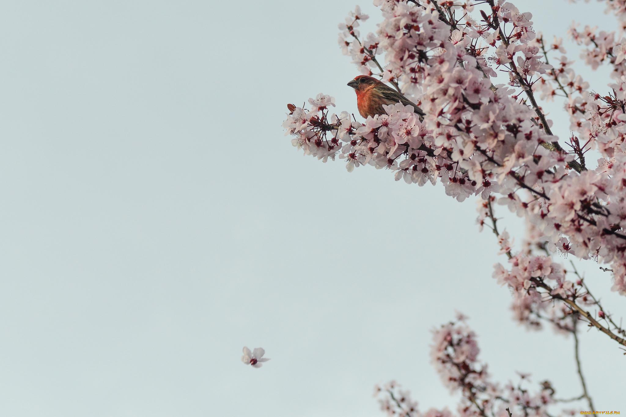 картинка весна минимализм нас